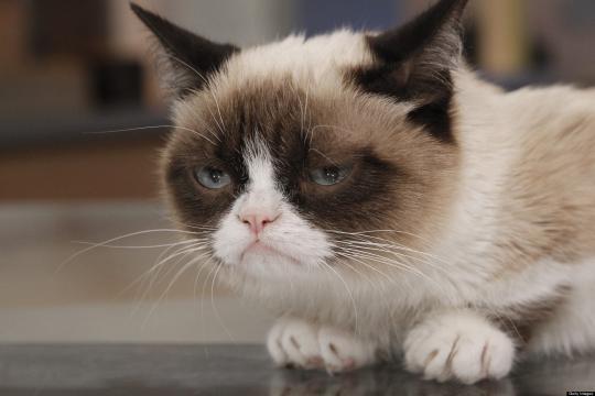 o-GRUMPY-CAT-MOVIE-facebook.jpg