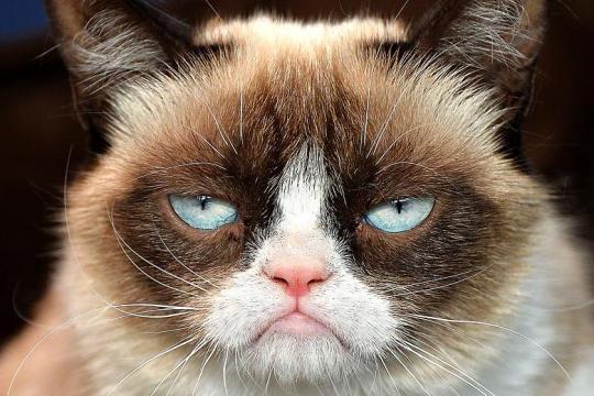 grumpy-cat-14.jpg